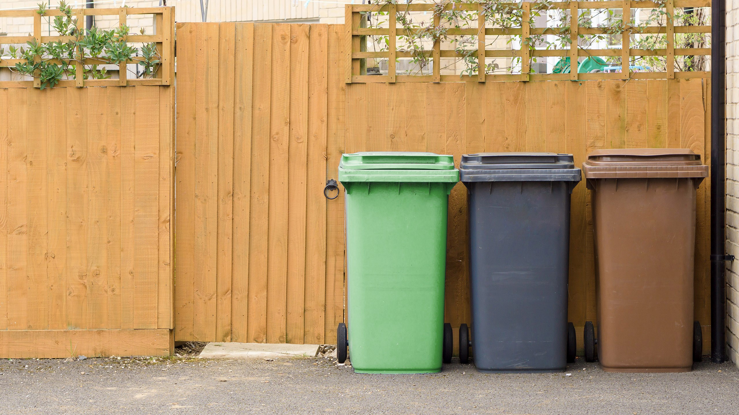 Bins, collections and recycling.jpg
