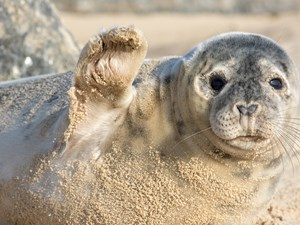 Safer Seals: Protecting seals in our district